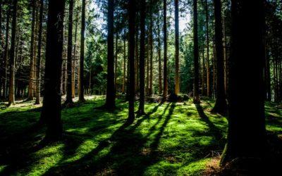 Dofinansowanie: Ochrona przyrody, edukacja ekologiczna – RPO Wielkopolskie